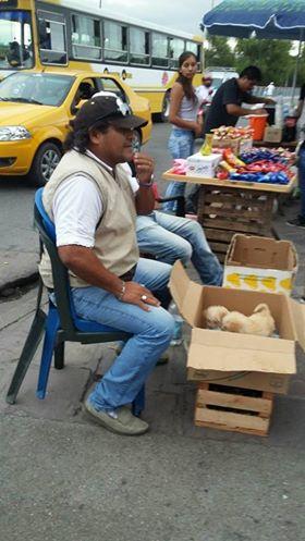 venta ambulante de animales