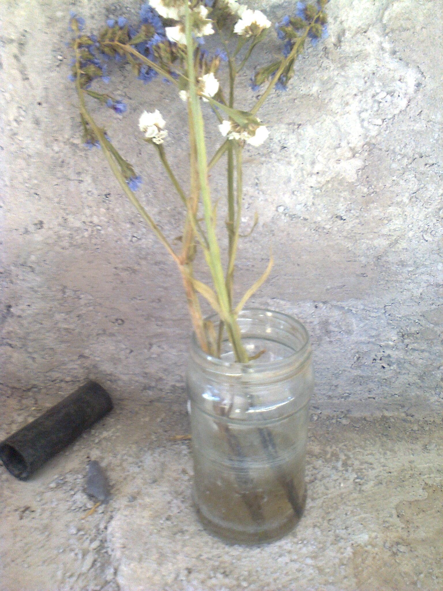 muy mal cementerio agua mosquito