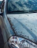 moscas-tucuman