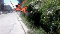 selva-paredon-iguazu 1 tarzan