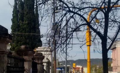 arbol calle gorriti